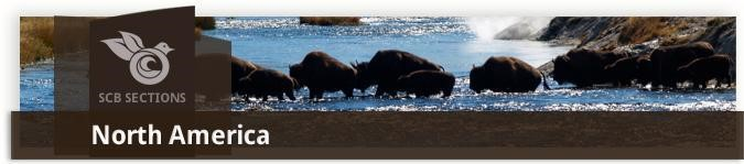 Buffalo herd runnign through river, Society for Conservation Biology Logo, North America Section